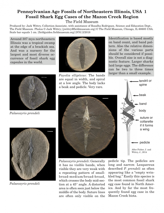 978_usa_fossil_shark_egg_cases_of_mazon_creek2.pdf