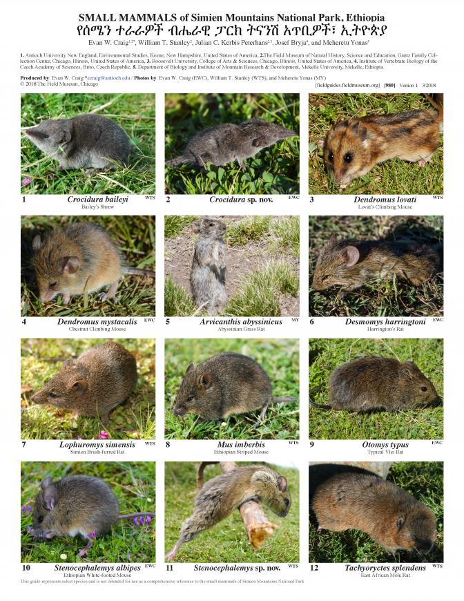 980_ethiopia_small_mammals_of_simien_mountains.pdf