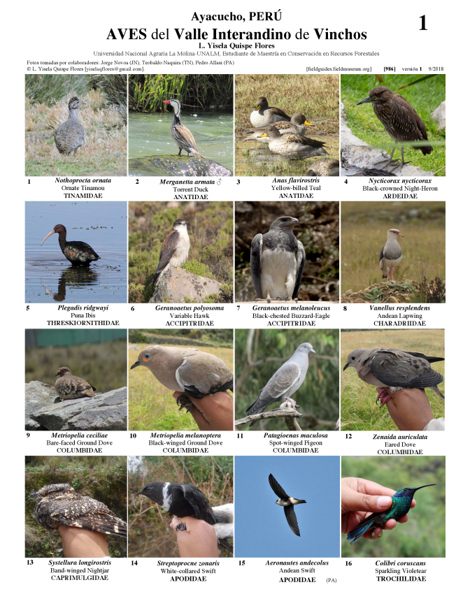 986_peru_birds_of_vinchos.pdf