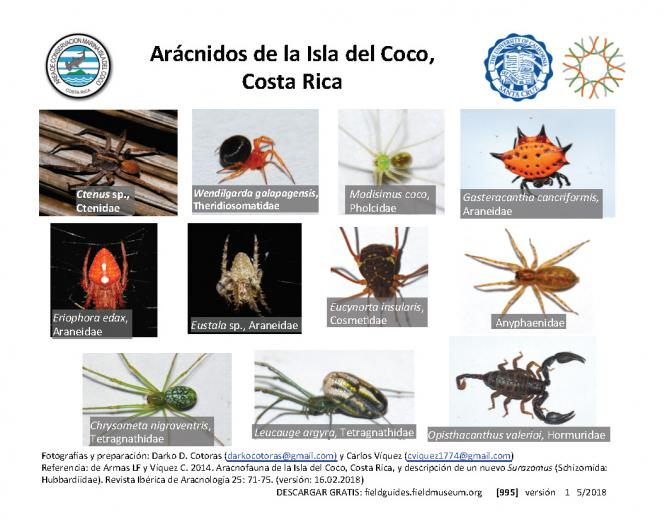 995_costa_rica_spiders_of_cocos_island.pdf