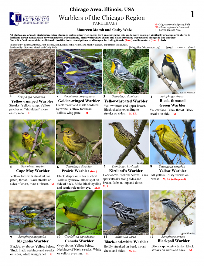 999_usa_warblers_of_the_chicago_region.pdf