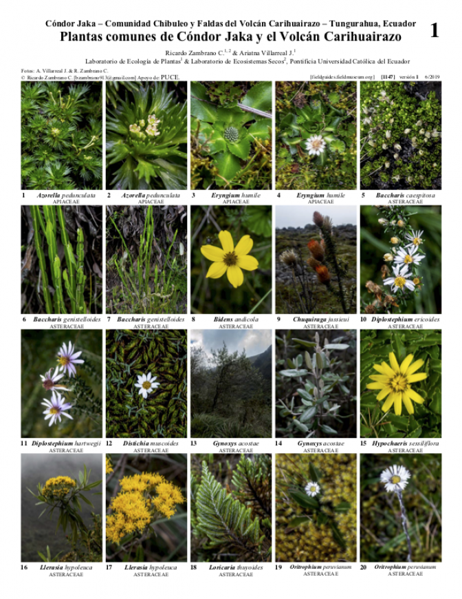 _1147_ecuador_common_plants_of_condor_jaka_and_carihuairazo.pdf
