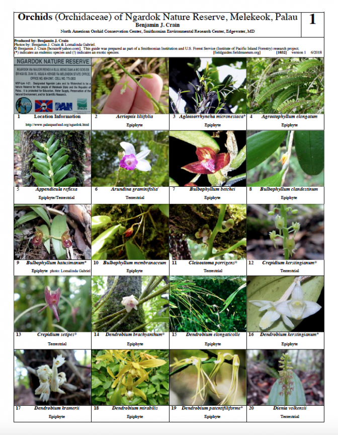 1032_orchids_of_ngadork.pdf